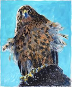 Gal Hawk