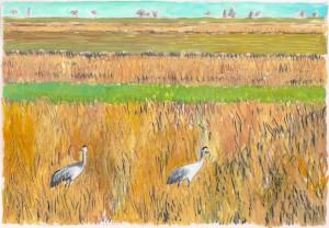 Delta birds