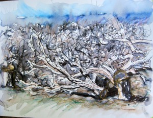 Orchard near Winters